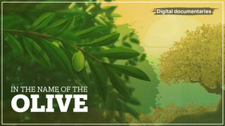 Discover the secrets of the olive