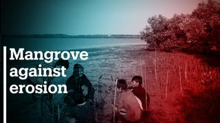 Indonesian activist on mission to save mangroves