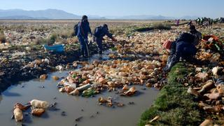 Man-made pollution threatens Bolivia's highlands and lakes | Money Talks