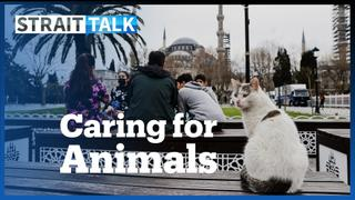 Turkey Passes New Legislation To Protect Animal Rights