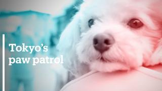 Puppies keep crime on short leash