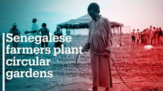 Senegalese farmers plant circular gardens