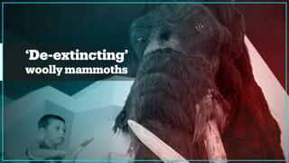 Bioscience firm says it will bring back extinct woolly mammoth