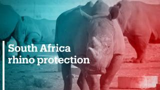 South African breeder seeks horns sale to keep poachers away