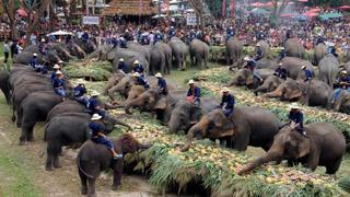 Collapse of tourism cash cow threatens thousands of elephants in Thailand | Money Talks