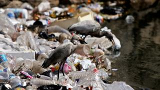 Egypt Garbage School: Tonnes of waste recycled in a day in Cairo