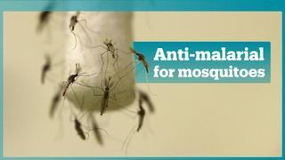 A new breakthrough in fighting malaria