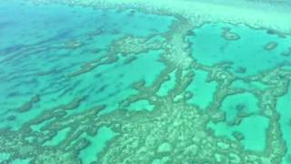Great Barrier Reef: Australian govt budgets $380M to restore reef