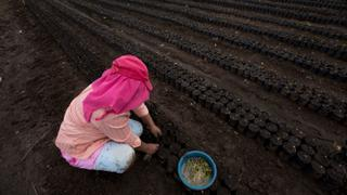 Guatemala Coffee: Climate change threatens quality and quantity