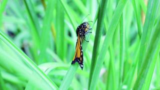Are insects facing extinction?