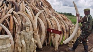 Can the illegal online trade of endangered wildlife be stopped?