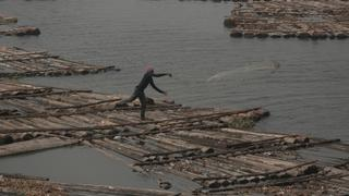 Nigeria Fishing Industry: Plans to ban imports and boost local production