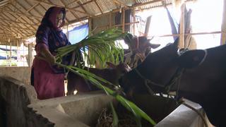 Business initiatives in Bangladesh empower thousands of women   Money Talks