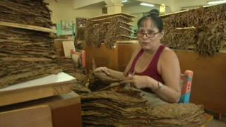Cuban Economy: Storytellers read to Cuban cigar workers