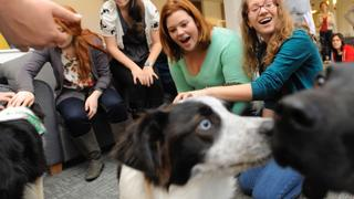 Animal Assisted Therapy: Could it transform healthcare?