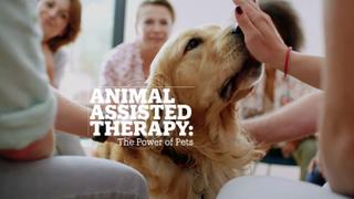 Animal Assisted Therapy: The power of pets?