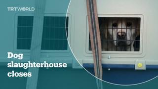 South Korea closes dog slaughterhouse