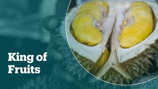 China's demand for Durian drives plantation growth in Malaysia