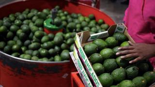 Private security guards protect avocado orchards in South Africa | Money Talks