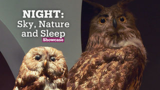 'Night' at Istanbul's Natural Sciences Centre | Exhibitions | Showcase