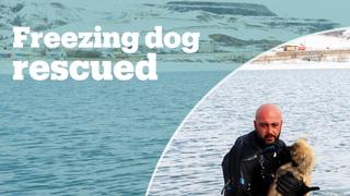 A Turkish police diver rescues a dog
