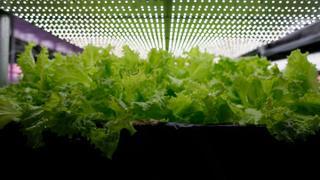 Vertical farming methods take root in Turkey | Money Talks