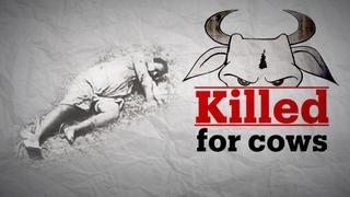 India's cow vigilantes