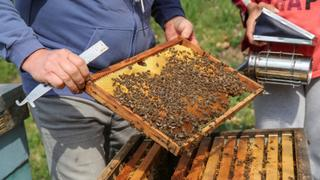 Serbia's Bees Dying: Insecticide poisoning hits honey bees