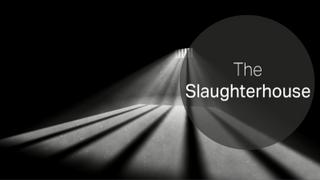 Surviving Bashar al Assad's Campaign of Torture