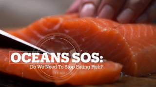 Oceans SOS: Do we need to stop eating fish?