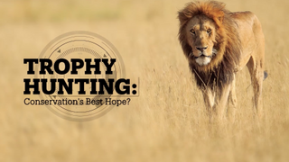 Trophy hunting: Conservation's best hope?