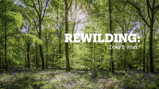 REWILDING: Does it work?