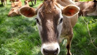 Netherlands community pools funds to run farm   Money Talks
