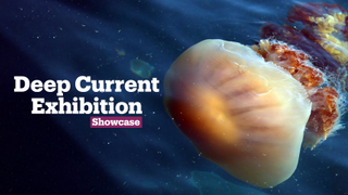 Deep Current Exhibition