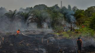 Indonesian women inspire communities to protect rainforests   Money Talks
