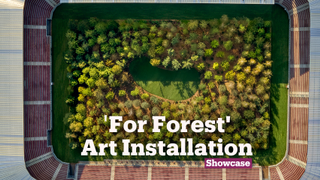 For Forest Art Installation