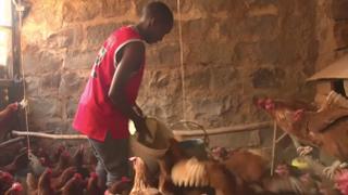 Kenya Sanitation: Companies turn human waste into animal feed