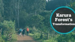 Kenya Forest: Hotbed of crime turns tourist destination