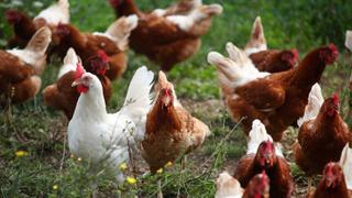 Ethiopian farmers forced to slaughter chicks as demand falls | Money Talks