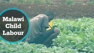 Malawi Child Labor: US boycotts tobacco imports over rights violation