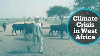 Climate Crisis: Fulani herdsmen seek greener pastures as droughts intensify