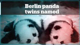 Berlin's new panda twins receive their names