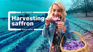My Turkey: Saffron from Safranbolu