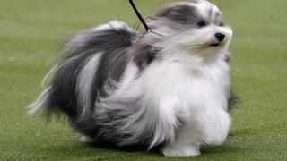 UK pet care industry surges as Brits adopt during lockdowns   Money Talks