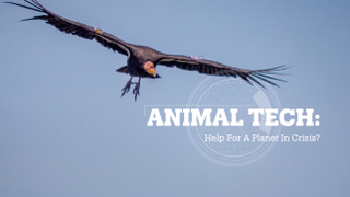 ANIMAL TECH: Help for a planet in crisis?