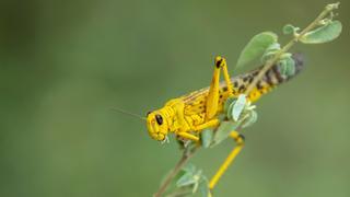 Locust outbreak threatens India's food security | Money Talks
