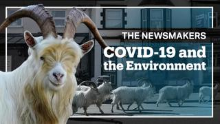 COVID-19: A Warning From Nature?