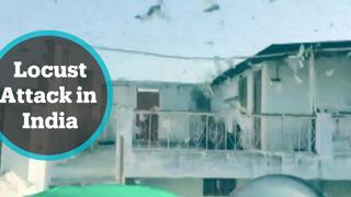 India sees worst swarm of locusts in decades