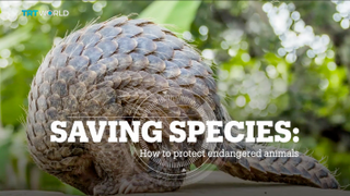 SAVING SPECIES: How to protect endangered animals