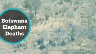 Hundreds of elephants lie dead in Botswana